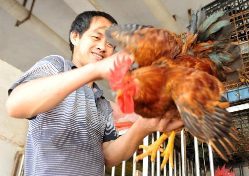 饲料产业体系向绿 畜牧业快步转向绿色发展