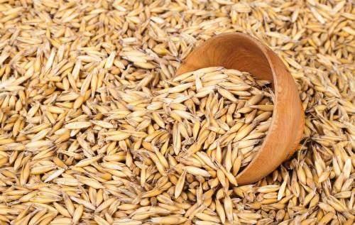 机构预测俄罗斯今年粮食出口量居世界第二