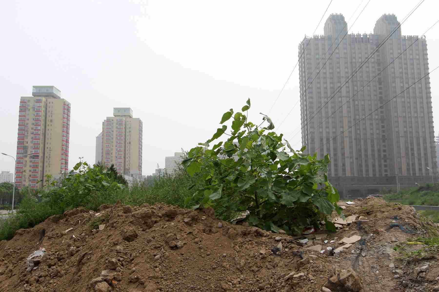 上半年300城土地收入1.95万亿 同比增27%