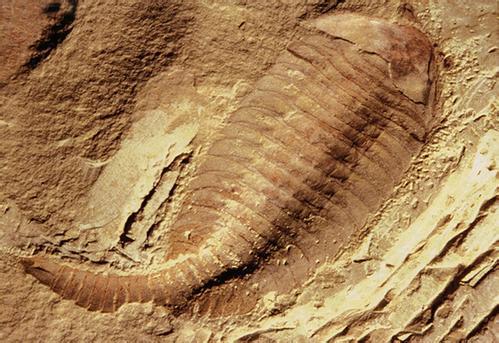 寒武纪抚仙湖虫类再现原始节肢动物形态