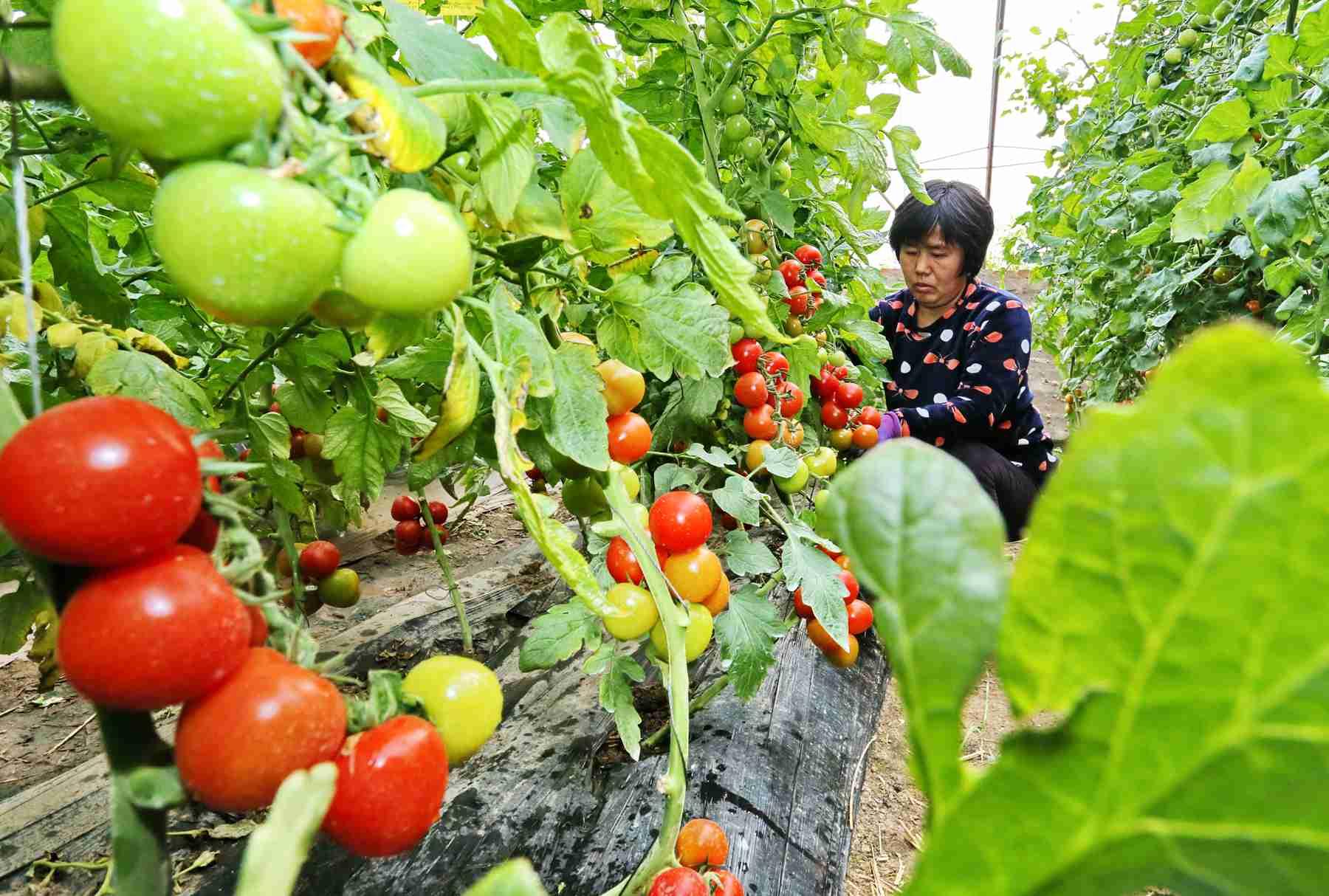 农业农村部:五方面着力促进中小企业发展
