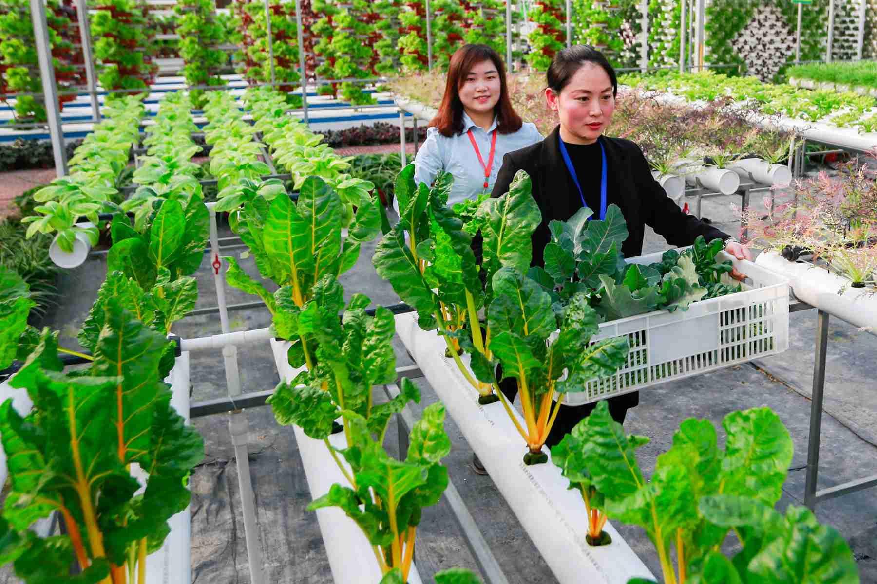農業農村部:近期蔬菜價格上漲屬于正常的季節性波動 壽光蔬菜受災對全國蔬菜市場供給影響有限