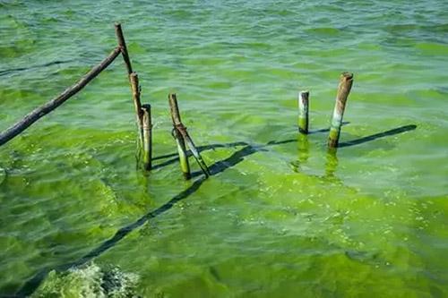 """""""世界水周""""论坛呼吁更多顺应自然的水问题解决方案"""