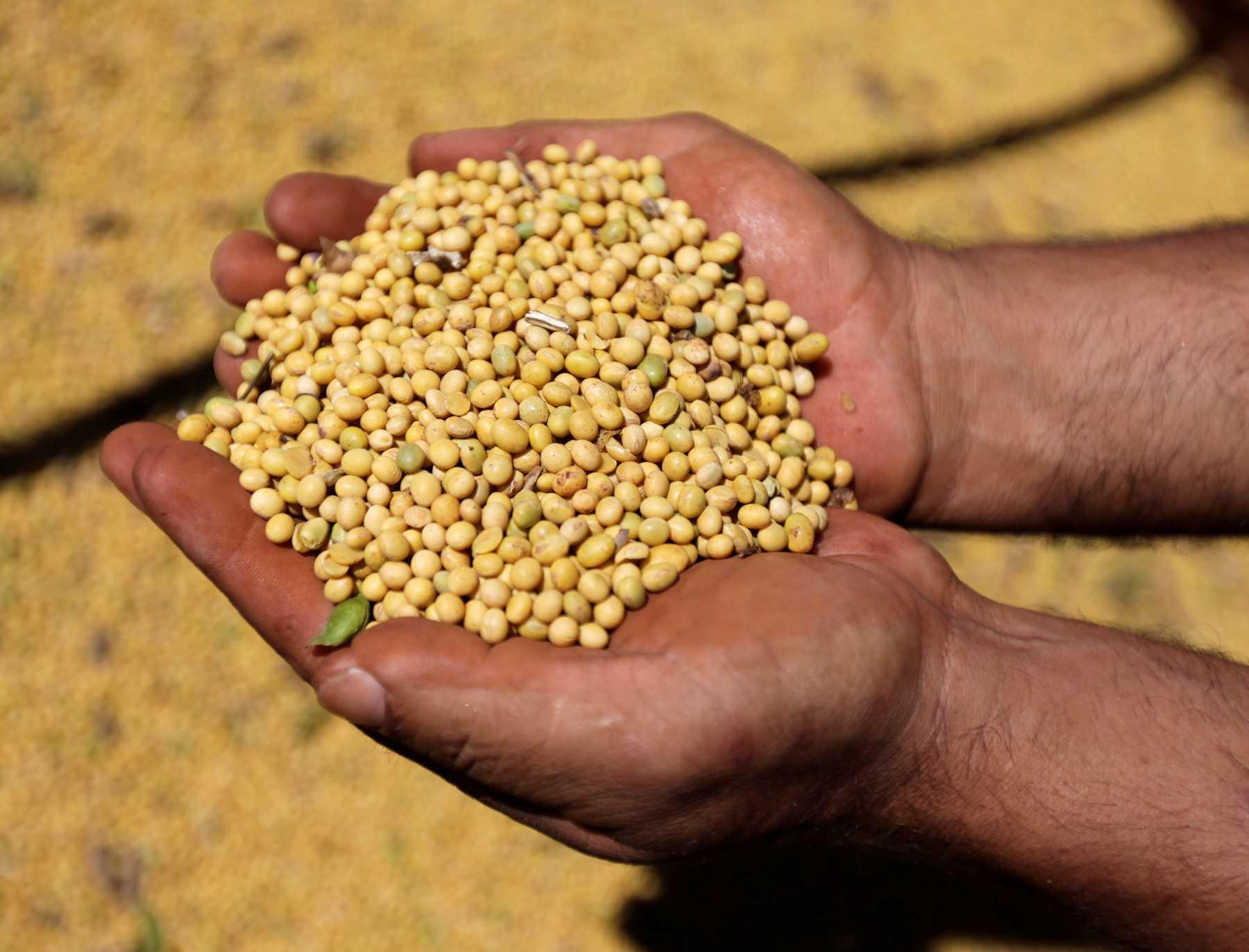 期货市场助力大豆产业转型升级