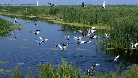 """""""十三五""""期间北京将恢复与建设湿地1.1万公顷"""