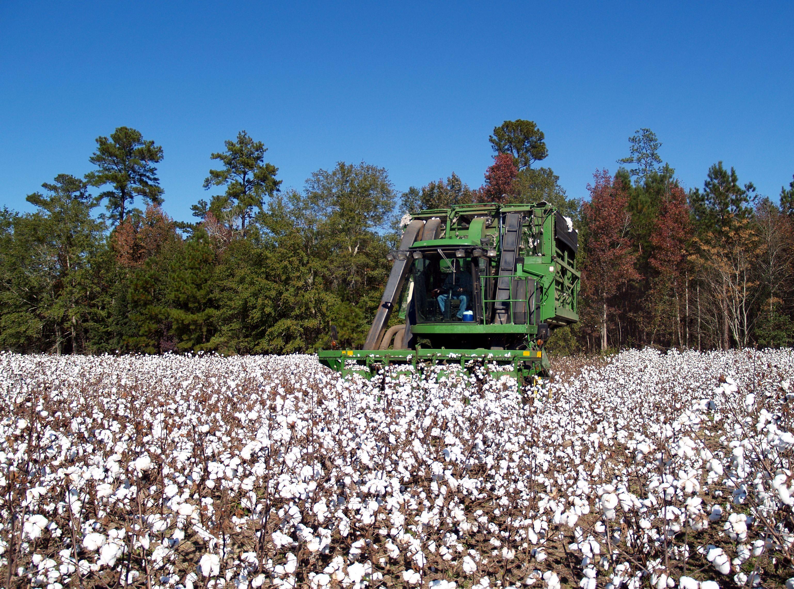 供应缺口限制棉价下跌空间