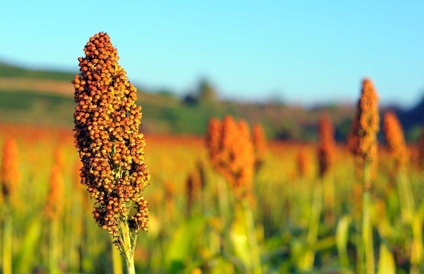 业内人士:警惕国际农产品期货多头持续减仓