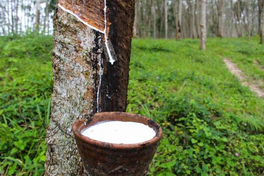 季节性特点明显 关注天然橡胶去库存季