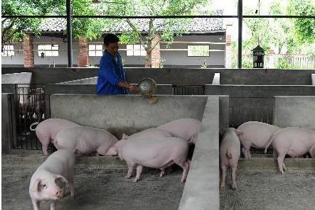 """小猪快跑!看哪些养猪企业猪年能抱上""""金猪"""""""