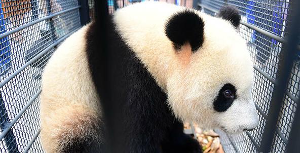 中国首部《大熊猫志》在四川出版