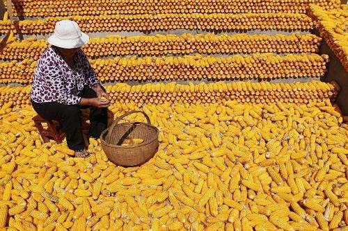 玉米系短期难现趋势性行情