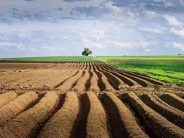 周子勋:中央一号文件确立了土地制度改革方向