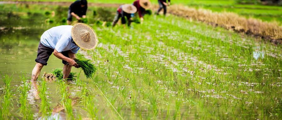 郑州首只现代农业发展投资基金设立