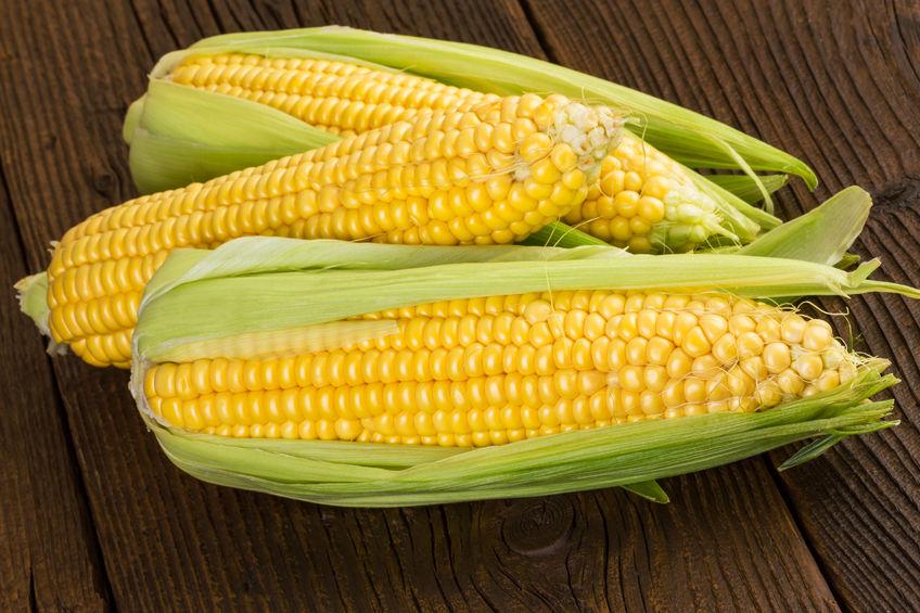 玉米期权首月成交额突破1亿元 交易客户近1300户