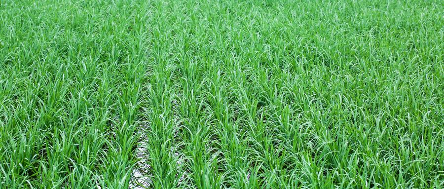 湖北沿江环湖打造700万亩稻渔综合种养区