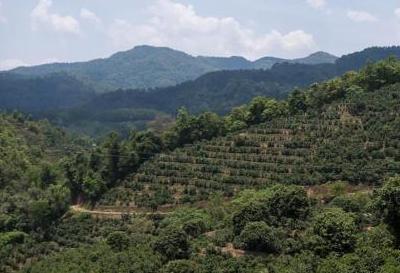 农业农村部及财政部发布2019年重点强农惠农政策
