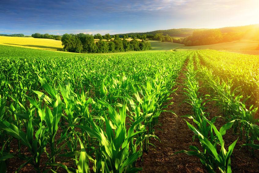 农业农村部:预计下半年猪肉供应趋紧 价格可能上涨