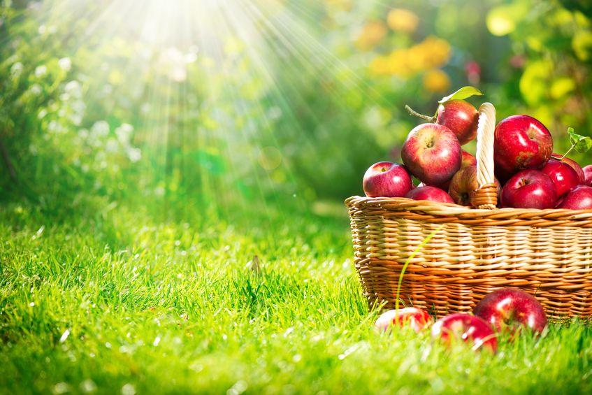 申万宏源:水果涨价潮预计逐步消退