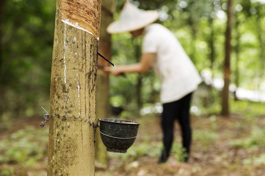上期所持续发力天然橡胶产业扶贫
