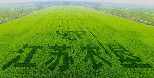 江苏农垦:持续改革打造现代农业航空母舰