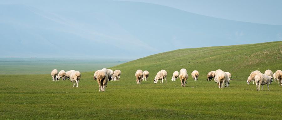 辽宁省出台奶业振兴方案 大力支持奶农发展乳制品加工