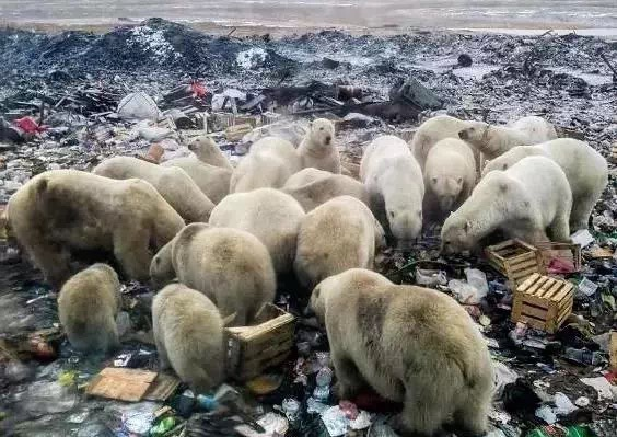 """""""你是什么垃圾""""?那些捍卫环保的艺术家"""