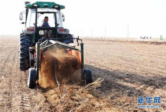 """(图文互动)(1)固沙又增效 我国第八大沙漠发展""""甜蜜产业"""""""