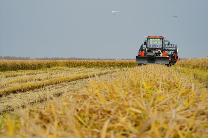 碧桂园北大荒打造无人化农场 无人化技术最先进、作业无人化程度最高