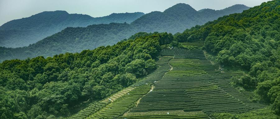 八馬茶業林榮溪:鄉村振興先把農業品牌做起來